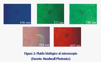 Figura 2: Fluido biológico al microscopio